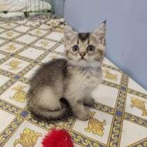Котята, в Оренбурге
