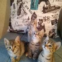 Отдам котят, 1,5 месяца, в г.Усть-Каменогорск