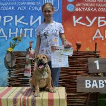 Selling puppies ca-de-bou (Major Mastiff), в г.Днепропетровск
