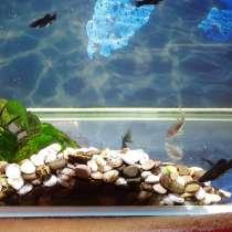 Аквариум с рыбками, в Тюмени