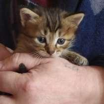 Ласковые котята, в г.Мариуполь