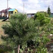 Сад, дача, ландшафт, в Сухом Логе