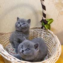 Продажа котенка, в Иркутске