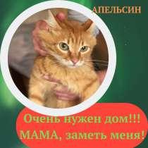 Два молодых котика ищут дом!, в Москве