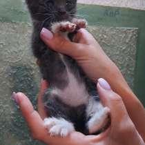 Котята в дар, в г.Витебск