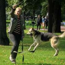 Удивительный летающий пёс, в Санкт-Петербурге