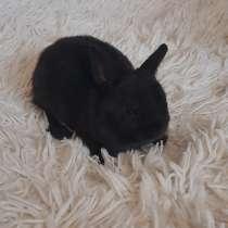 Карликовые кролики, в Рязани