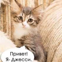 Джесси- котёнок с «моторчиком», в Москве
