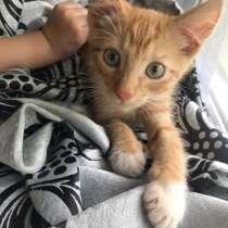 Кот рыжик, в Ярославле