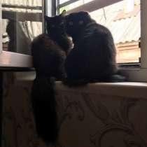 Кошки на окошке, в Краснодаре