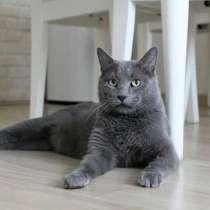Красавец кот серо-голубого окраса в добрые руки, в Москве