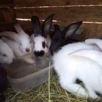Продам кроликов, в Курске