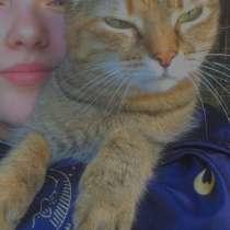 Отдаю кошку в хорошие руки, в связи с переездом, в Тюмени