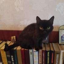 Кошка чернушка, в г.Донецк