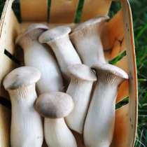 Семена степных боровиков, в Красноярске