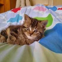 Котята, в Балашове