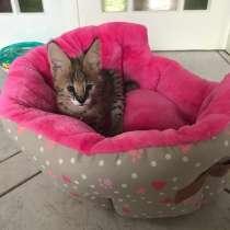 Котёнок Сервал, в г.Гуанчжоу