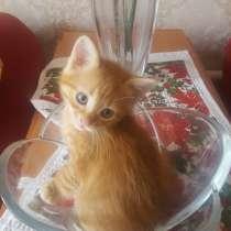 Кошки от мамы мышеловки, в Воронеже