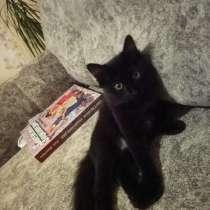 Отдам котёнка в добрые руки, в Красноярске