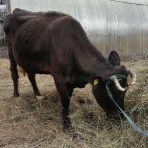 Продам корову, в Прокопьевске