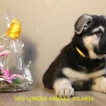 Продаются щенки восточноевропейской овчарки в Германии, в г.Биттерфельд