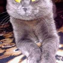 Вязка кота, в г.Макеевка