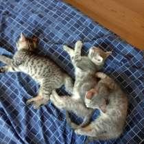 Котята, в Зеленограде