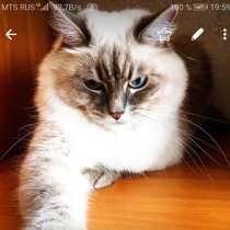 Вязка, кошка ищет партнёра, в Железногорск-Илимском