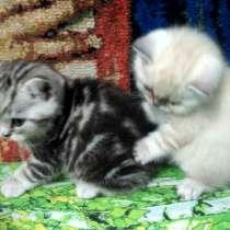 Котятки-мраморятки, в Подольске