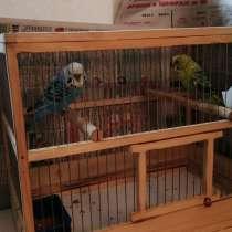 Попугаи, в Брянске