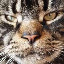 Лучшие котята Мейн-Кун для Вас, в г.Котка