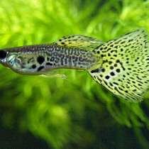 Аквариумные рыбки и растения не дорого, в Самаре