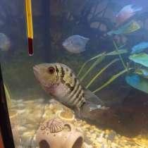 Рыба плюс аквариум, в Москве