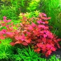 Аквариумн растения, Корм для рыб, Креветки, Антибородин, удо, в Санкт-Петербурге
