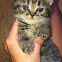 Котёнок девочка, в Ярославле