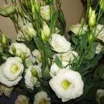 Эустома (Лизиантус) цветы от производителя, в г.Брест