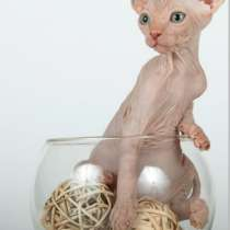 Куплю котенка канадского сфинкса, в г.Тирасполь