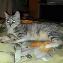 Кошечка милашка, в Москве