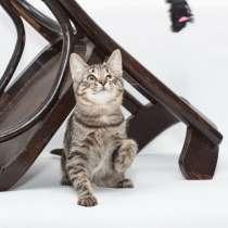 Мурлыка-котенок с дефектом глазика очень ищет дом, в Санкт-Петербурге