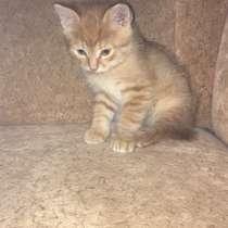 Котёнок, в г.Лисичанск