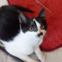 Котенок ищет новый дом, в г.Борисов