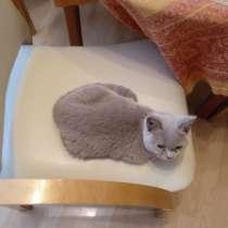 Кошка, сука, британец 7-9 месяцев, отдам, в Москве