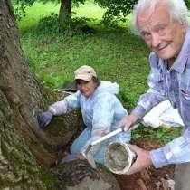 Лечение любых садово-парковых растений, Микро-инъекции, в Сочи