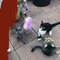 Котята ищут новых любящих хозяев, в Железногорске