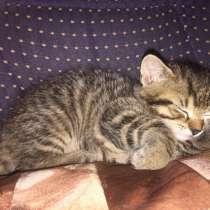 Милые маленькие котята кошки, в г.Прага