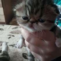 Котята, в Белорецке