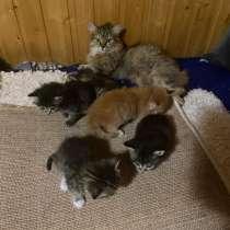 Непоседлевые котята, в Нижневартовске