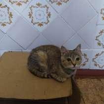 Миниатюрная молодая кошечка, в г.Донецк