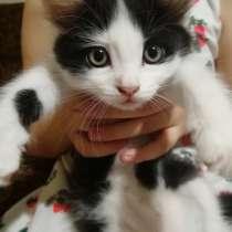 Отдам котят (мальчики) в хорошие руки, в Астрахани