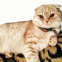 Кот на вязку, в г.Бишкек